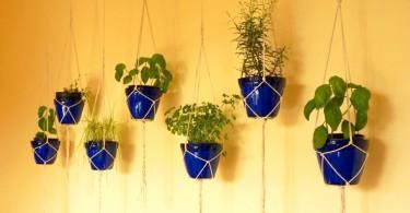 flowers-of-herbs-02