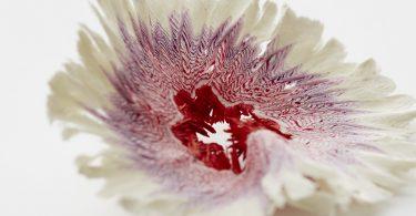 Изящные бумажные цветы от Харуки Мисавы: неожиданное применение точилки для карандашей