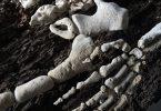 Необычные паззлы Грегори Халили: сложить человеческий скелет из морских кораллов