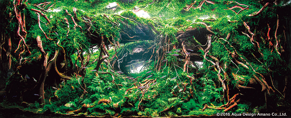 Итоги ежегодного Международного конкурса водных растений, 2016