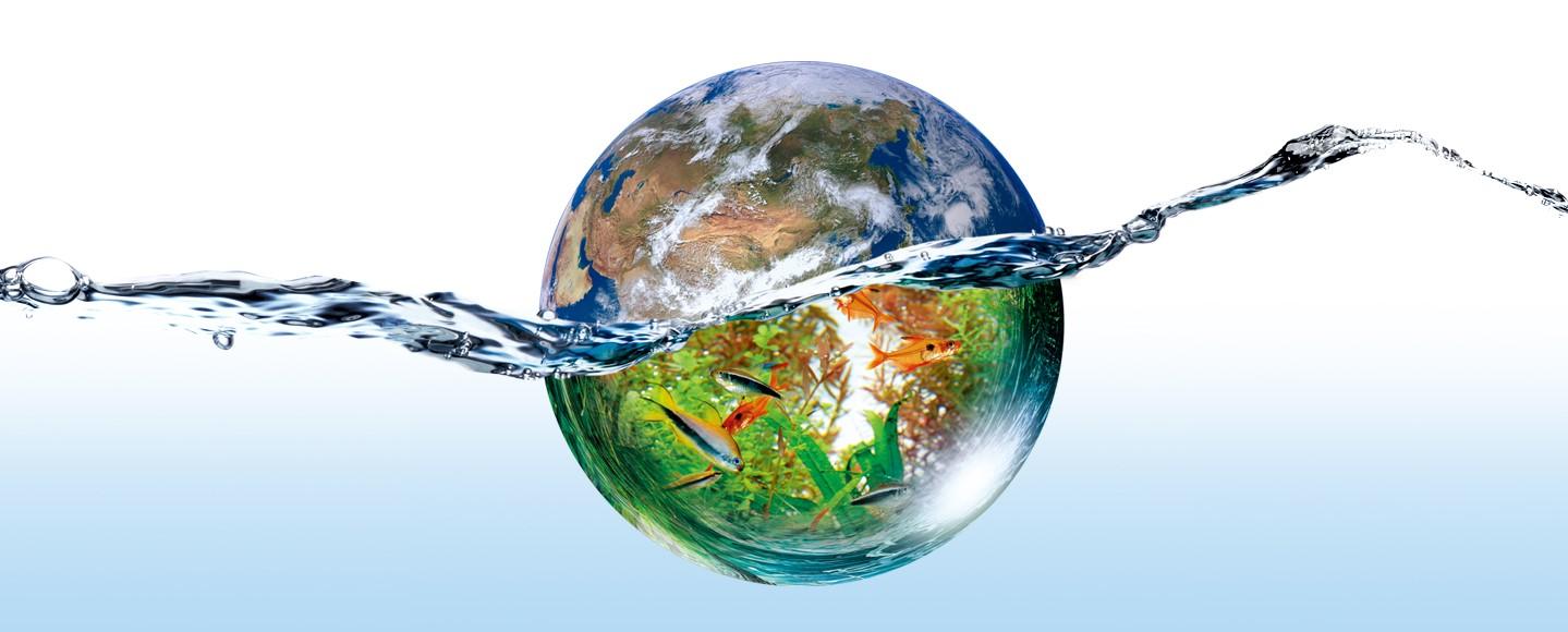 Дизайн аквариумов: итоги ежегодного Международного конкурса водных растений, 2016