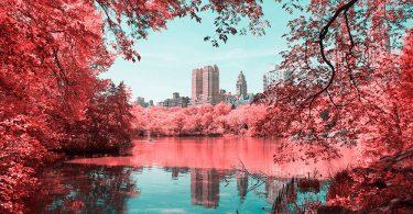 Центральный парк Нью-Йорка в голубом и розовом