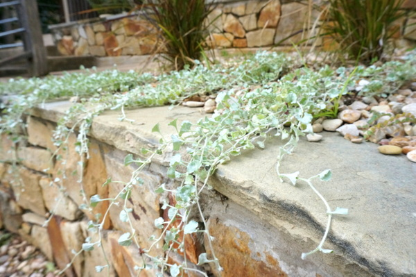 Вьющиеся растения в дизайне сада