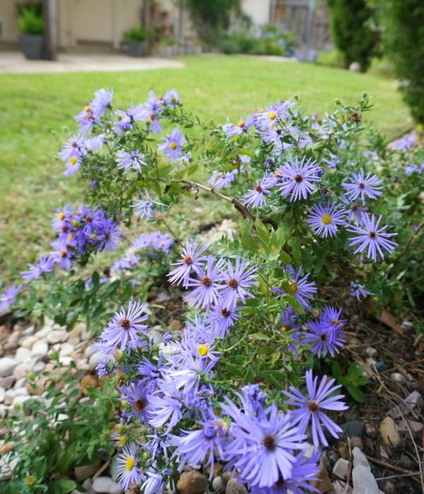 Голубые цветы в дизайне сада