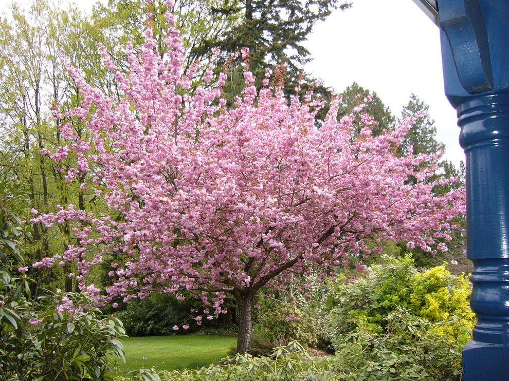 Дерево с розовыми растениями