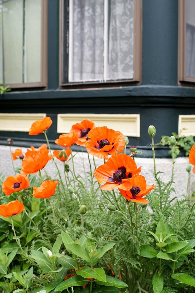 Интерьер дома в скандинавском стиле: небольшая клумба у дома