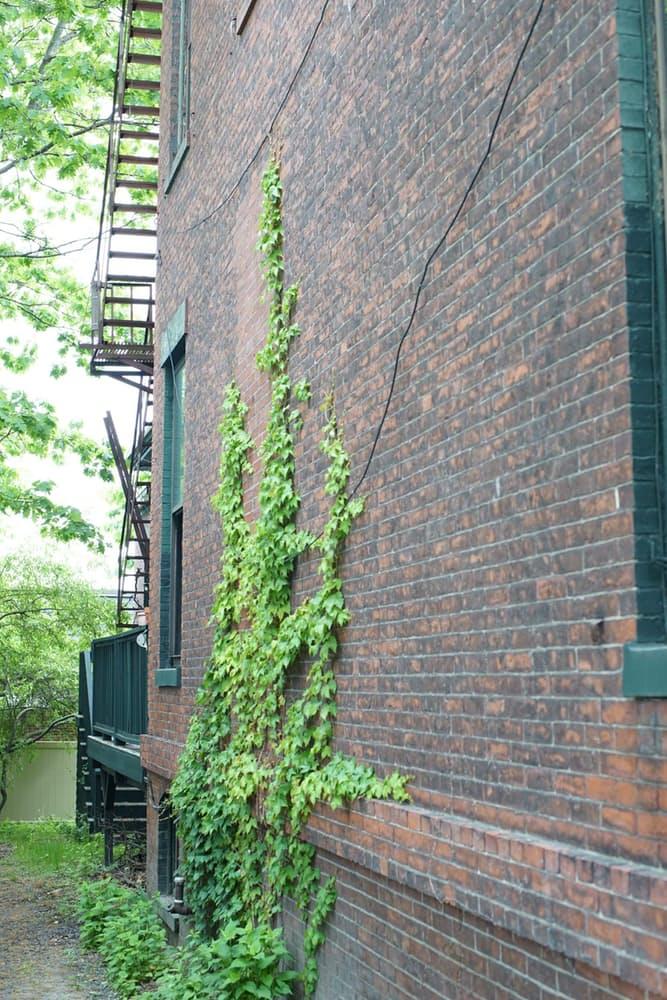 Интерьер дома в скандинавском стиле: вьюны на фасаде здания