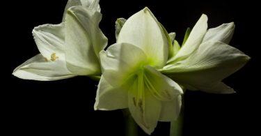 Весна: эффектный цветочный таймлапс от режиссёра Джейми Скотта