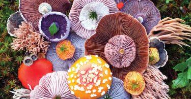 Джилл Блисс: цветные грибы из фотосерии «Природная мозаика»
