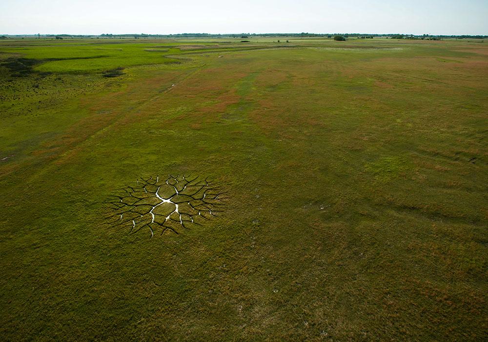 Мировое дерево: потрясающая ленд-арт инсталляция Кристиана Балога