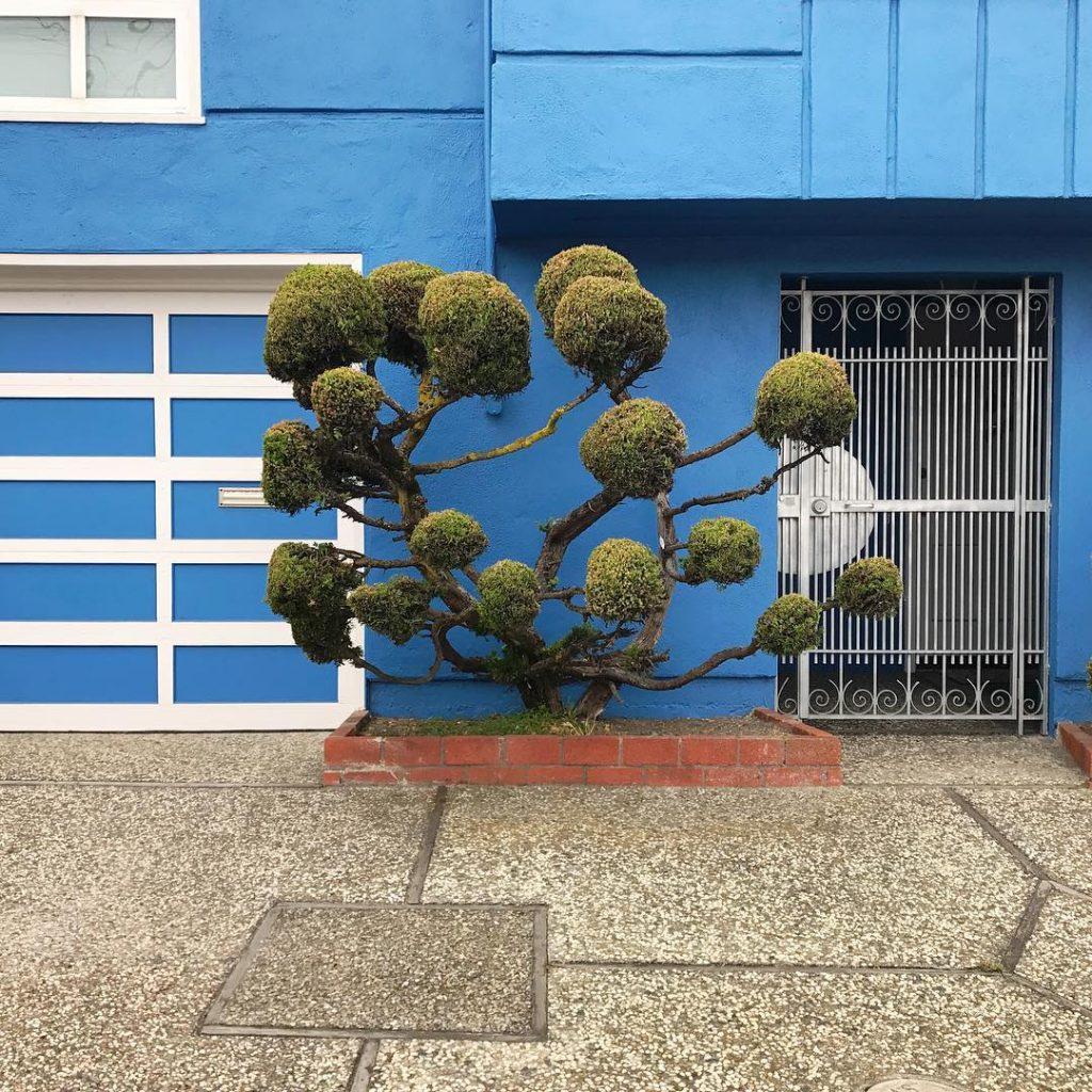 Келси МакКлеллан: искусство топиари на улицах Сан-Франциско в серии фотографий