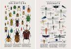 Келси Озеид: естественно-научные акварельные иллюстрации