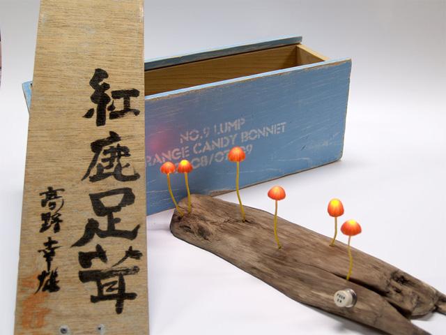 Умопомрачительные светильники в форме гриба от Yukio Takano