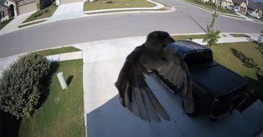 Стробоскопический эффект: застывшая птица в фокусе объектива камеры наблюдения