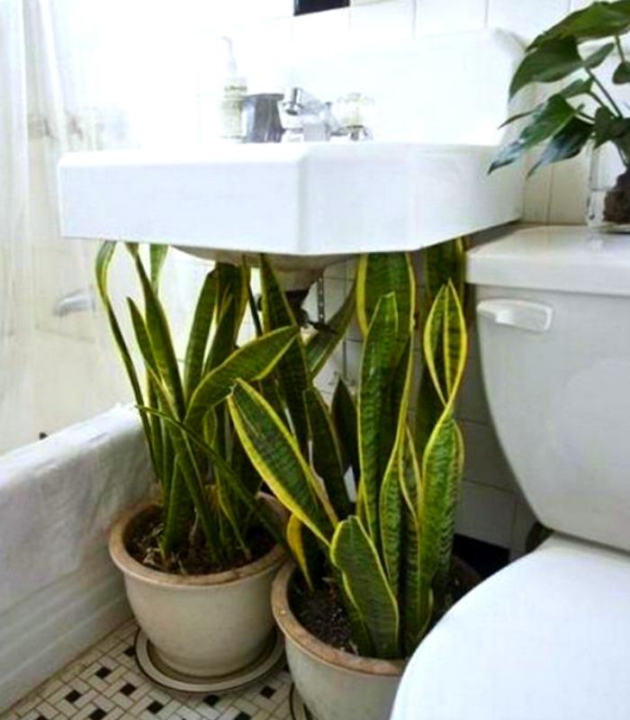 Цветы в ванной комнате от James Wong и David Cubero