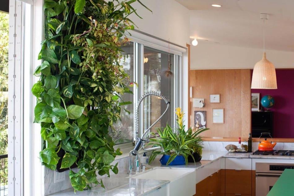 Горшечные растения на кухне