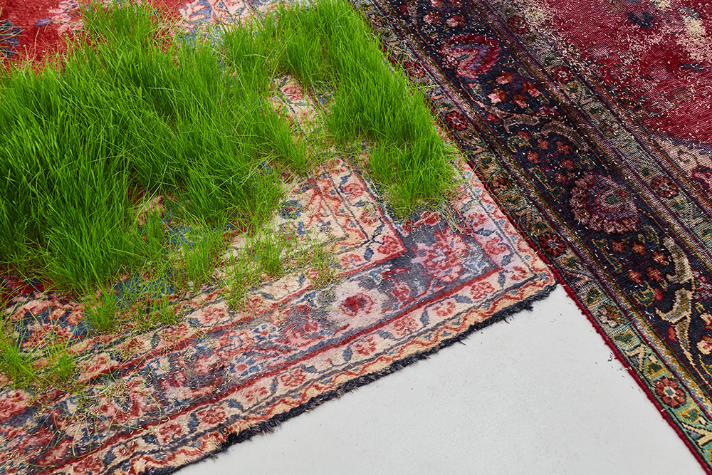 Зелёные газоны на персидском ковре: художественные метафоры бренности бытия от Мартина Рота