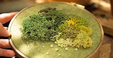 Эмма Мэтсон: реалистичные вышивки разнообразных видов мха
