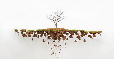 Хорхе Майет: скульптуры деревьев с обнажёнными корнями как метафора утраченной родины
