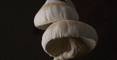 Поганки от Мистера Финча – очаровательные шитые скульптуры из винтажных тканей