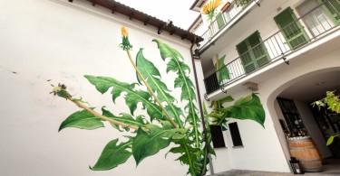Мона Карон: живописные сорняки на стенах старых зданий