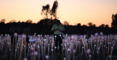 Брюс Манро: необычная инсталляция в сердце австралийской пустыни
