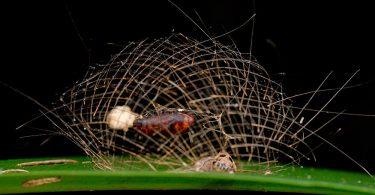 Личинки насекомых: новые макро фотографии от Ники Бэя