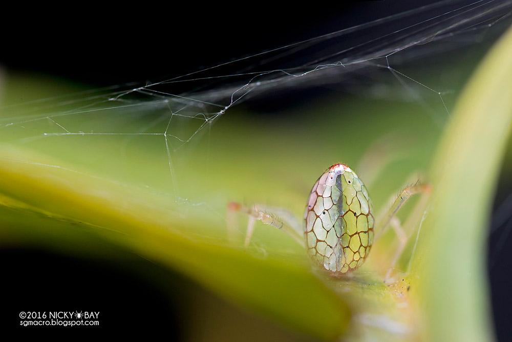 Ники Бэй: зеркальные пауки в новой серии удивительных макрофотографий
