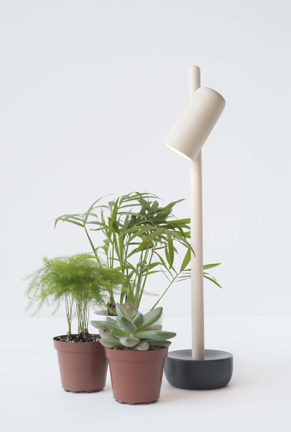 Оригинальные настольные лампы - светильник Petiole - фото 2
