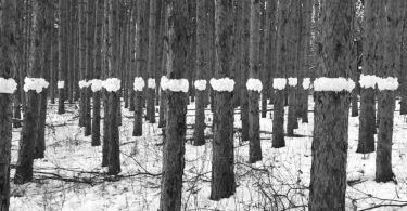 Анимированные картины от Пола Джонсона: живые узоры из компонентов загородного пейзажа