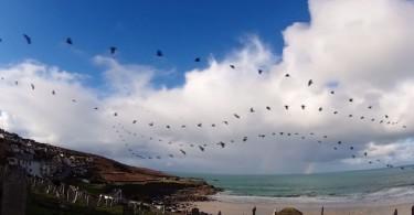Пол Паркер: интервальная съёмка птичьих стай в небе Корнуолла