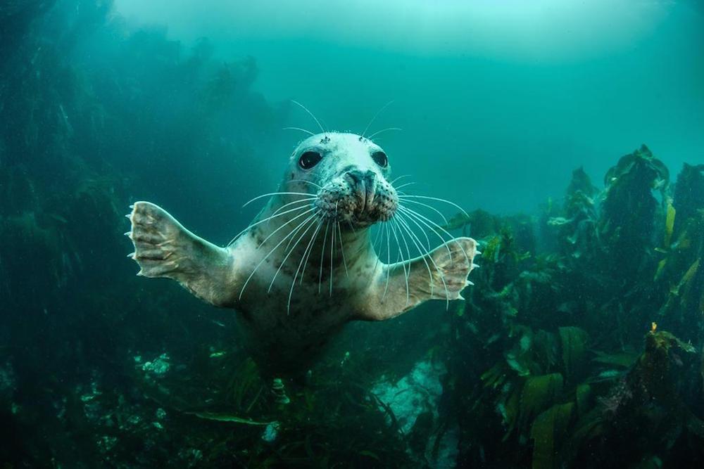 British Wildlife Photography Awards, 2016: потрясающие фотографии дикой природы Великобритании