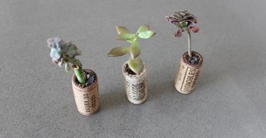 Старые винные пробки в виде кашпо для растений
