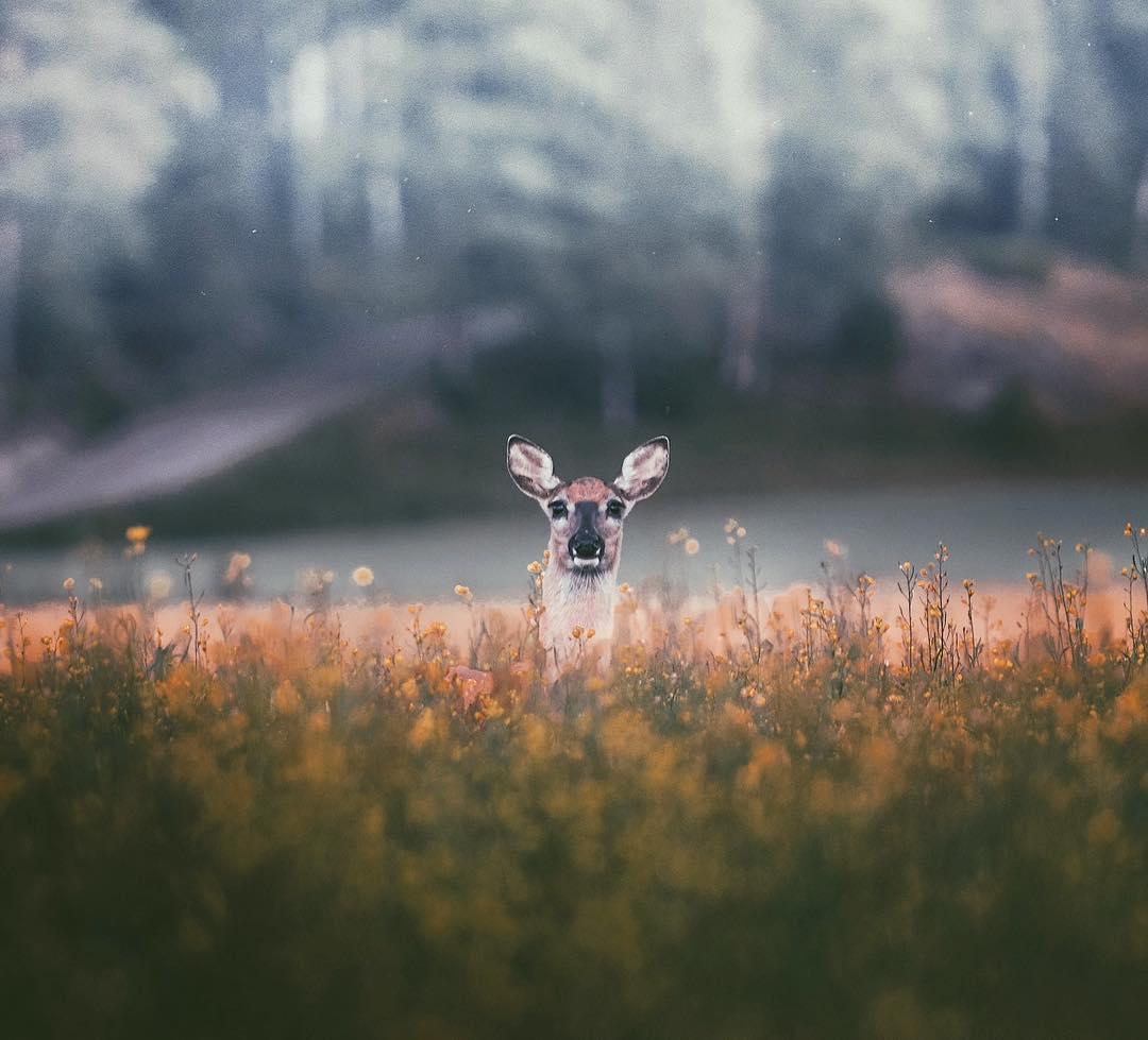 Снято с близкого расстояния: фотографии дикой природы от Конста Пункка