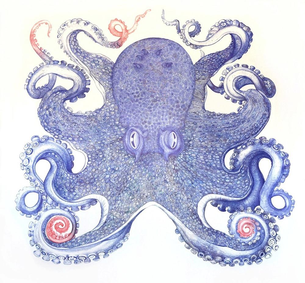 картинки осьминог нарисованные