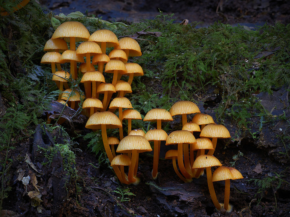 Новые фотографии грибов от Стива Аксфорда