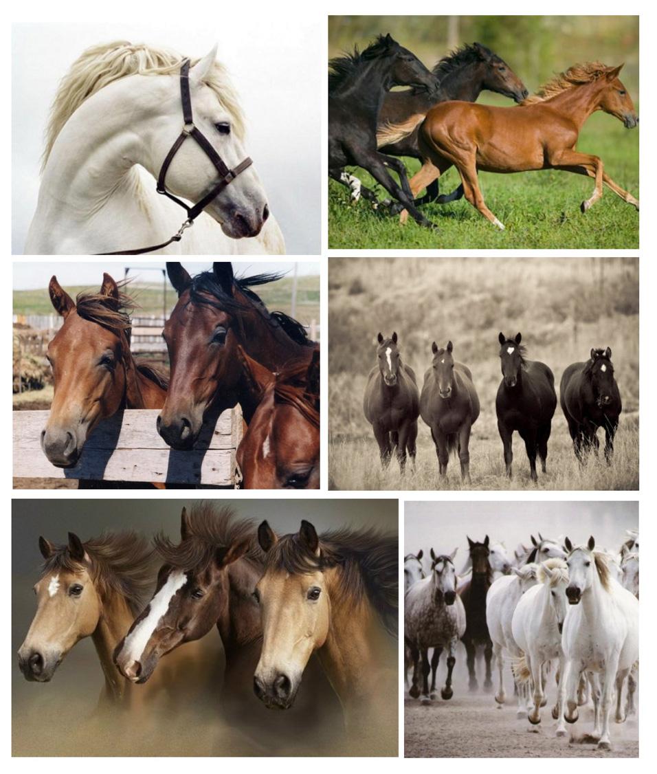Великолепные животные лошади