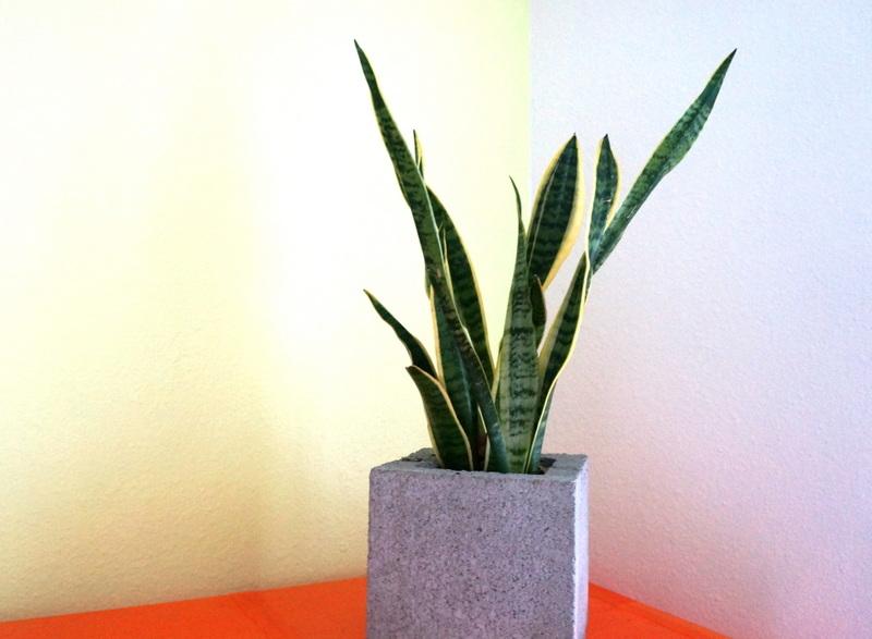 Горшок с растением