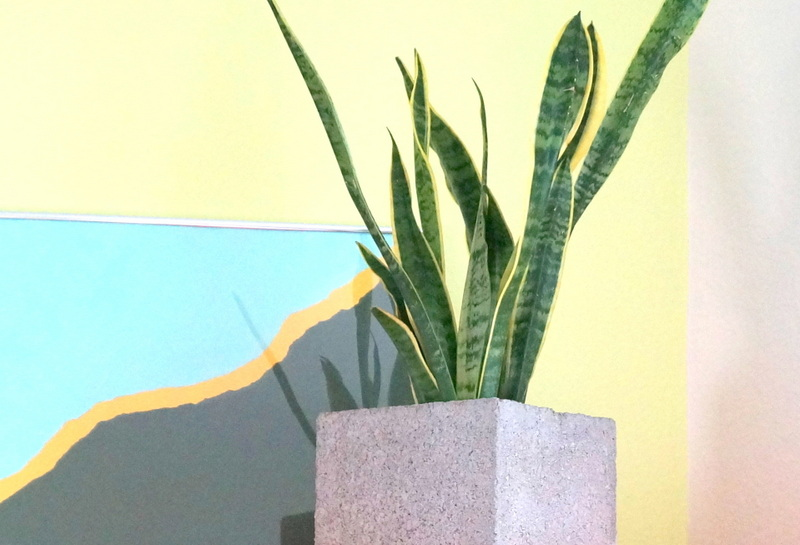 Горшок с растением на полке