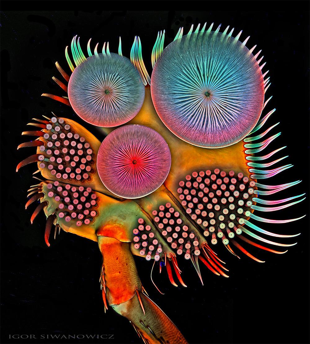 Игорь Сиванович: психоделические макрофотографии, снятые под микроскопом