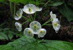 Двулистник: фотоколлекция метаморфоз цветов под дождём