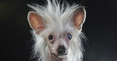 Софи Гамон: забавные фотографии голых собак в коллекции «Пророчество»