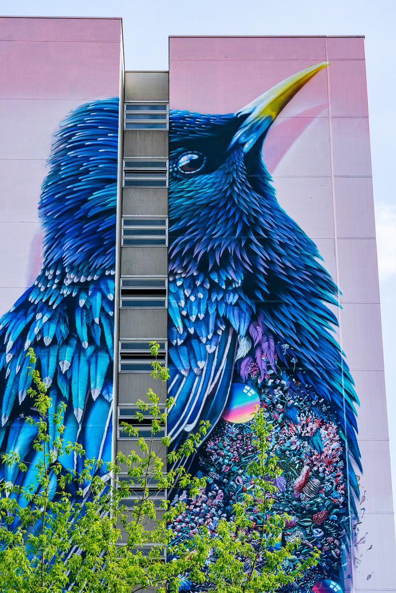 Скворец: масштабная фреска на здании в Берлинском районе Тегель