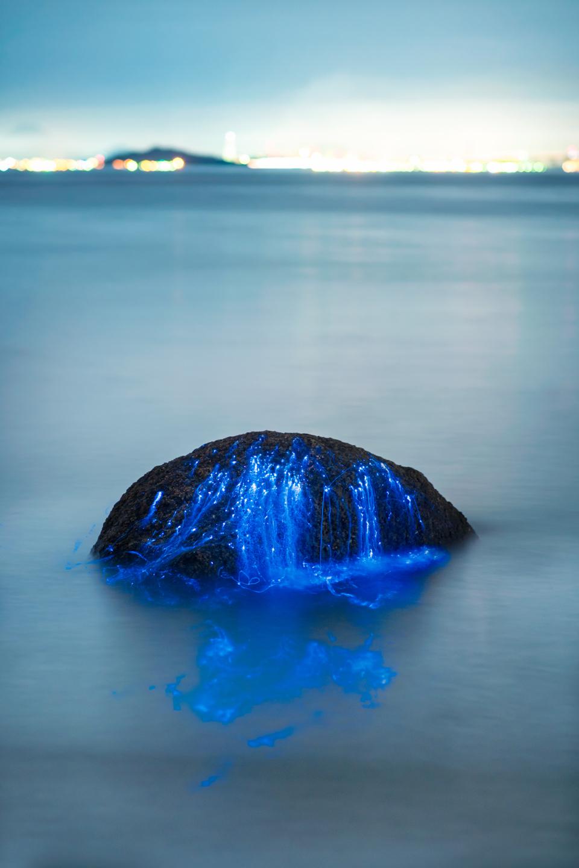 Морские светлячки: биолюминесцентные узоры на мистических фотографиях от студии Tdub Photo