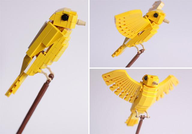 Необычная стая тропических птиц от Tom Poulsom