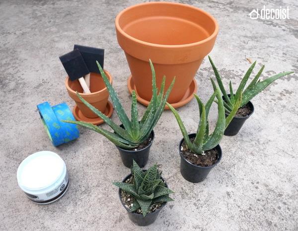 Красивые растения для высадки