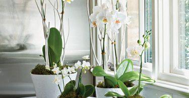 Украшение окон дома комнатными растениями