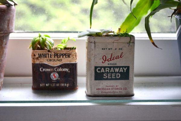 Растения в банках из-под кофе