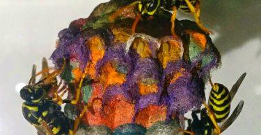 Осиные гнёзда психоделической расцветки: эксперименты итальянского студента