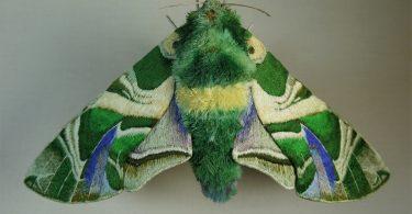 Юми Окита: очаровательные вышитые насекомые из текстиля